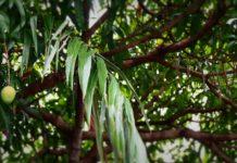 Mexico avocado trees travel