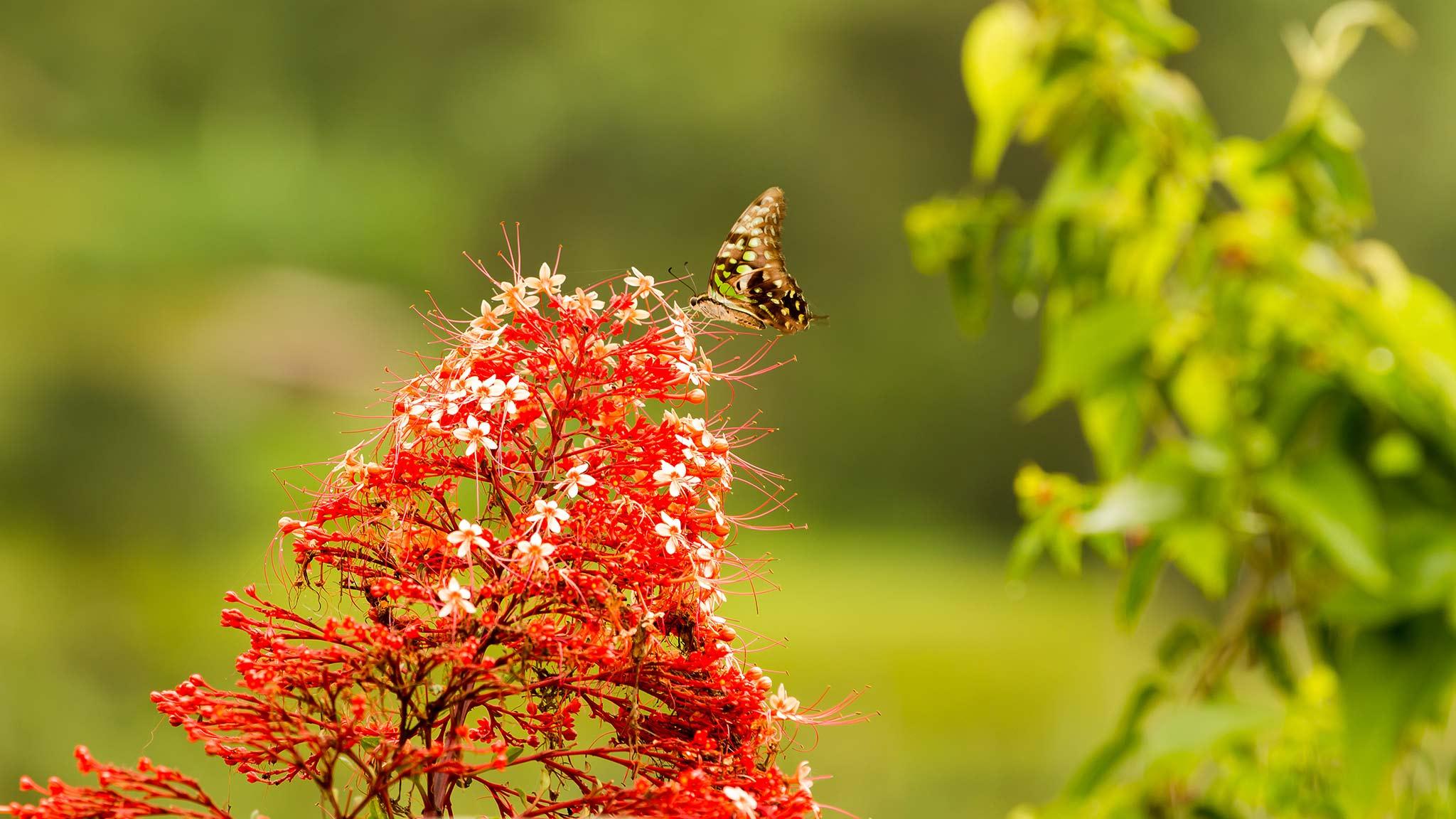 Butterfly on a flower in the Bali Butterfly Park