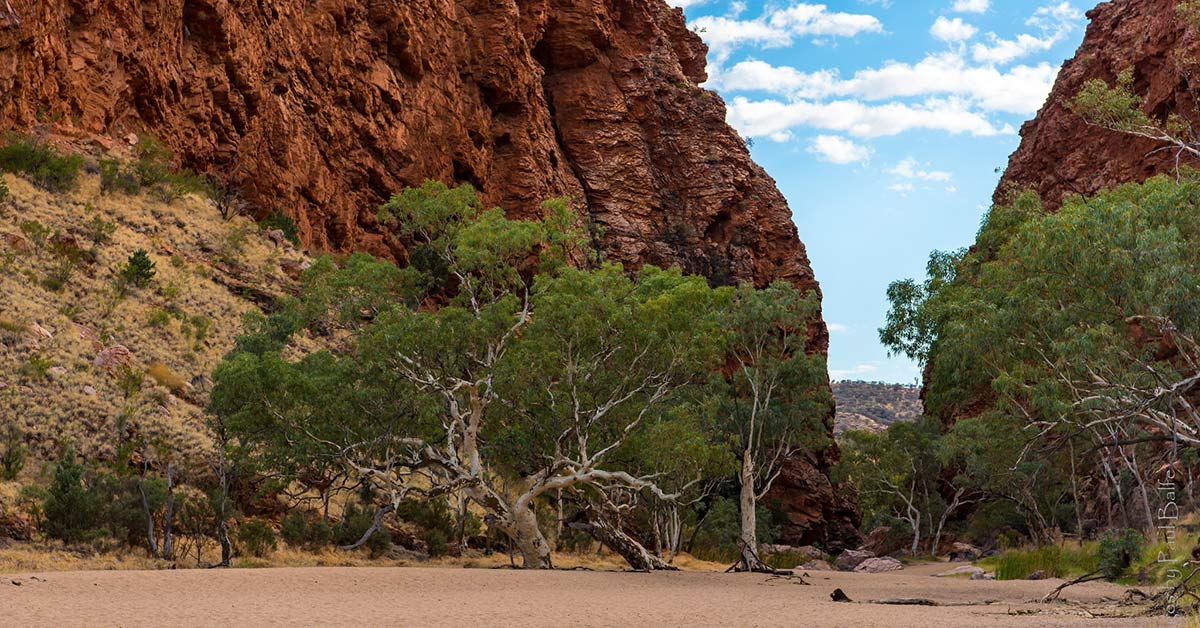 An image of Red River Gum National Park in New South Wales Australia