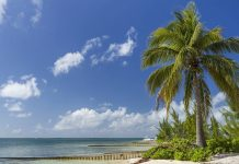 Beautiful beach, blue skies and palm trees on the Cayman Islands