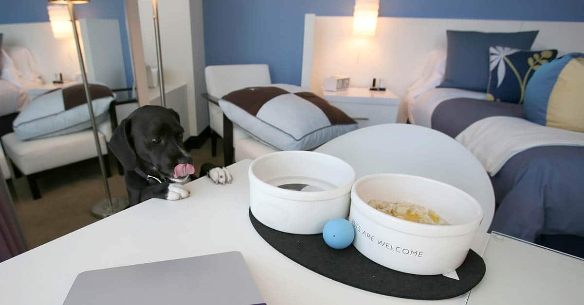dog looking at treats in a pet friendly hotel room