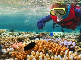 Scuba diver exploring the Great Barrier Reef in Queensland, Australia