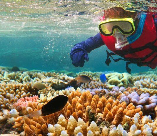 Scuba diver exploring the Great Barrier Reef in Queensland, Australia