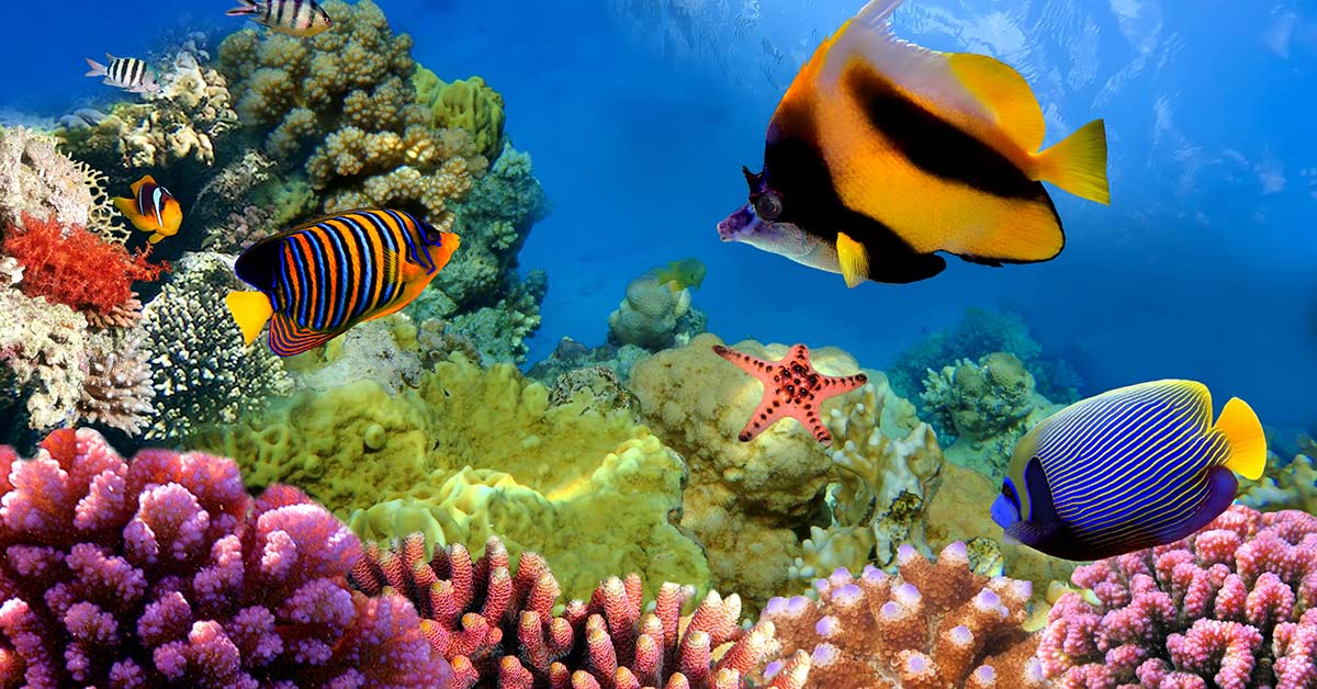 Several colorful fish species that are found on the Great Barrier Reef in Australia