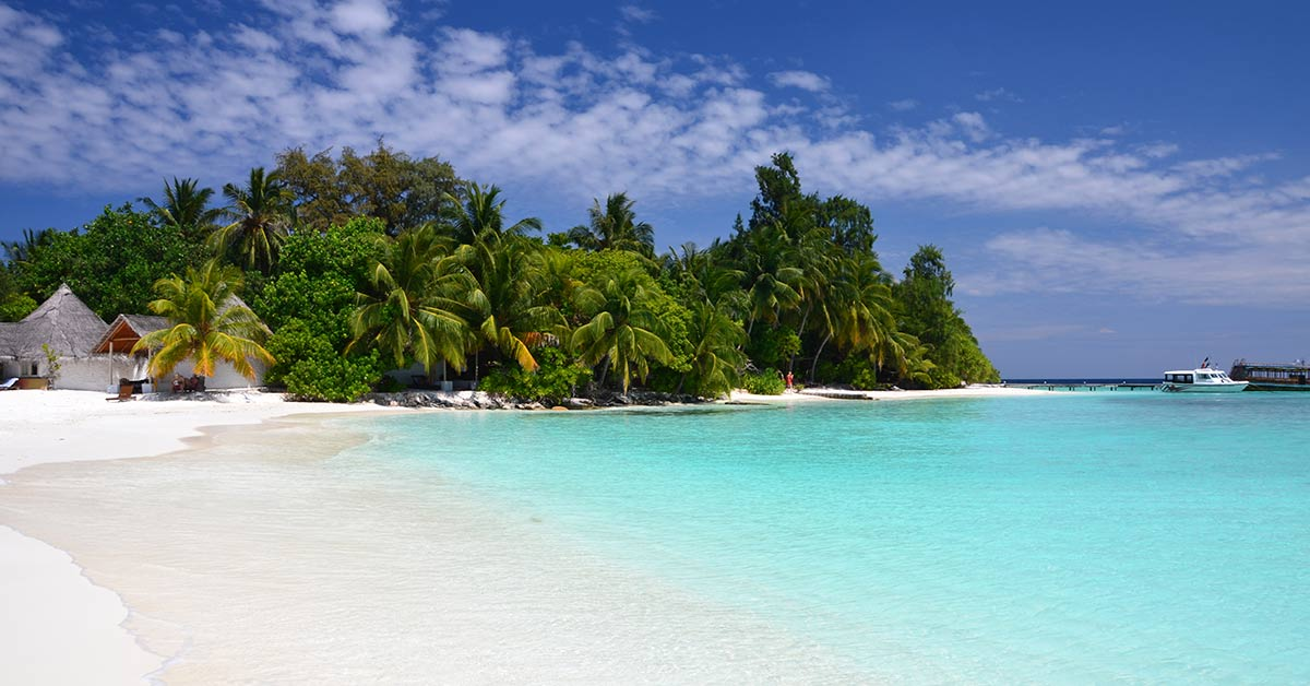 a white sand beach with palm trees in the background Maldives