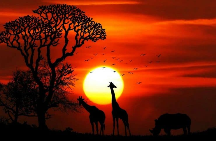 silhouette of giraffes and rhino against an African sunset during safari. aTRAVELthing.com