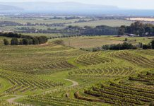An image of a vineyard in Australia's wine country