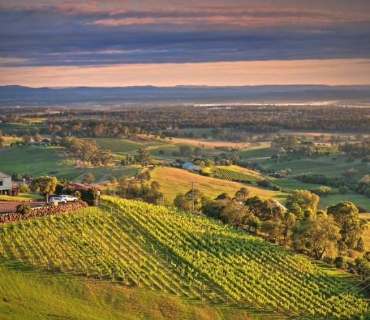 Aerial view of a vineyard located in Hunter Valley, New South Whales Australia