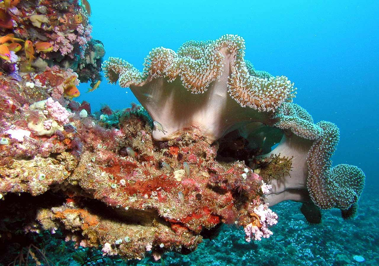 A view of the coral reef while scuba-diving in the Maldives