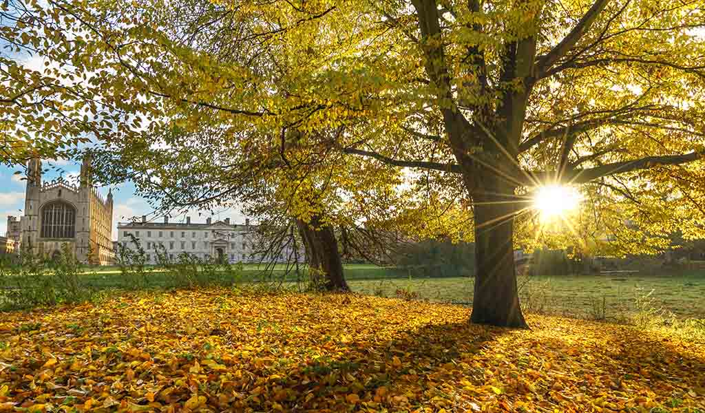 Autumn Leaves in Cambridgeshire