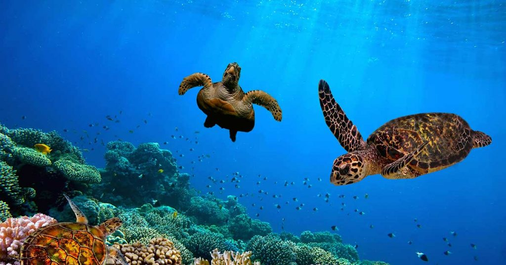 Image of sea turtles swimming - Galapagos Islands.