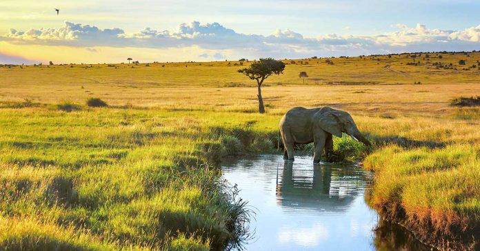 Image of an elephant in the Masai Mara National Reserve, Kenyia