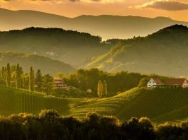 South styria vineyards landscape, near Gamlitz, Austria, Eckberg, Europe. Grape hills view from wine road in spring.
